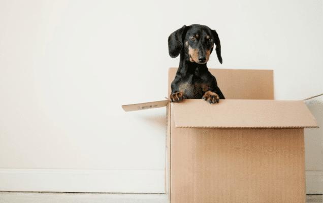 17 Tips til effektiv stabling av flyttegods i container